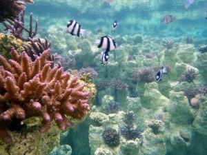 Sango Batake – An Artificial Coral Reef on Land